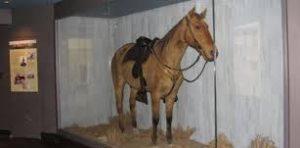 Comanche caballo valiente