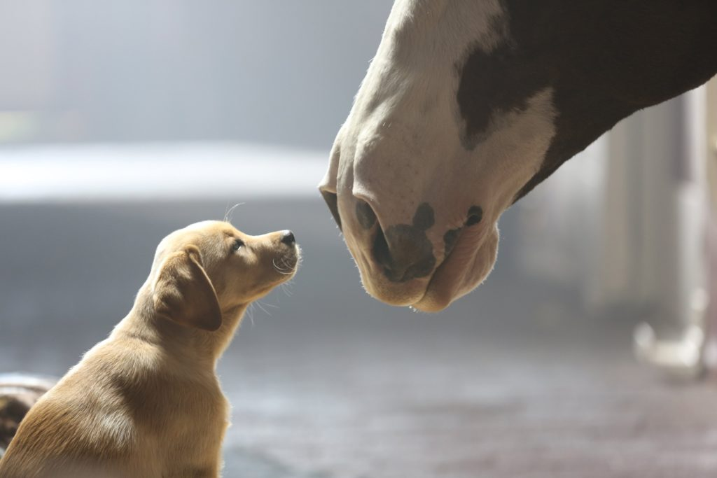 caballos y perros
