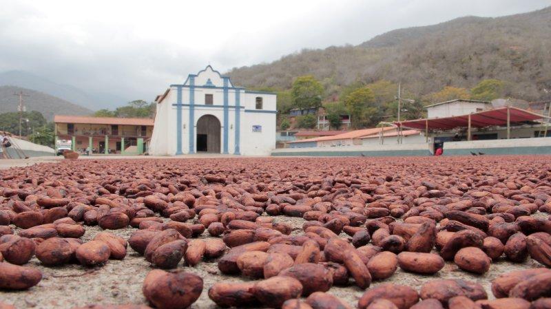 CHUAO, UN PUEBLO CON SABOR A CHOCOLATE