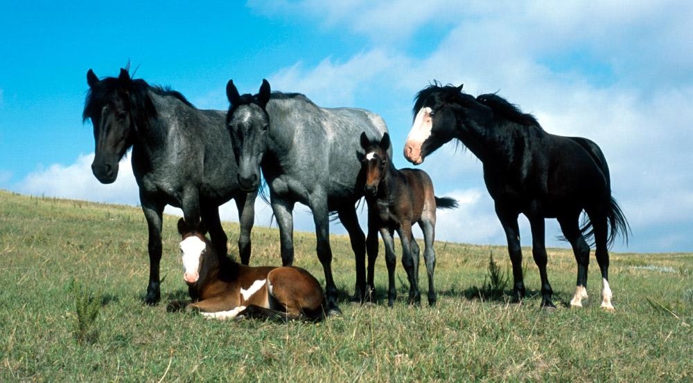 Las curiosidades sobre los caballos – Gustavo Mirabal