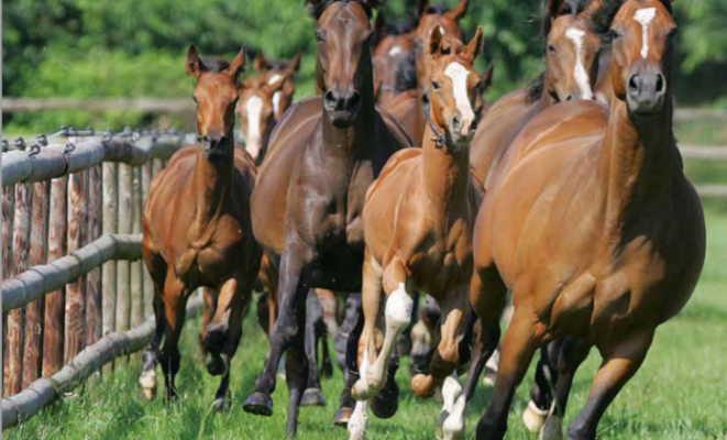 Cría y reproducción de caballos – Gustavo Mirabal