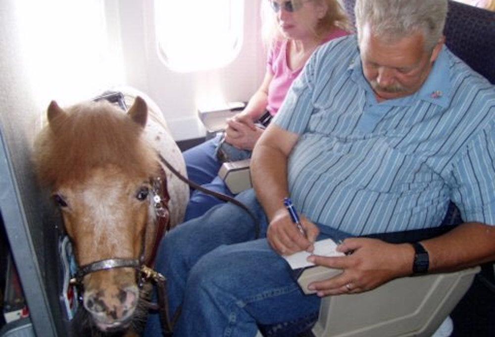 Caballos miniatura podrán viajar en avión en Estados Unidos – Gustavo Mirabal
