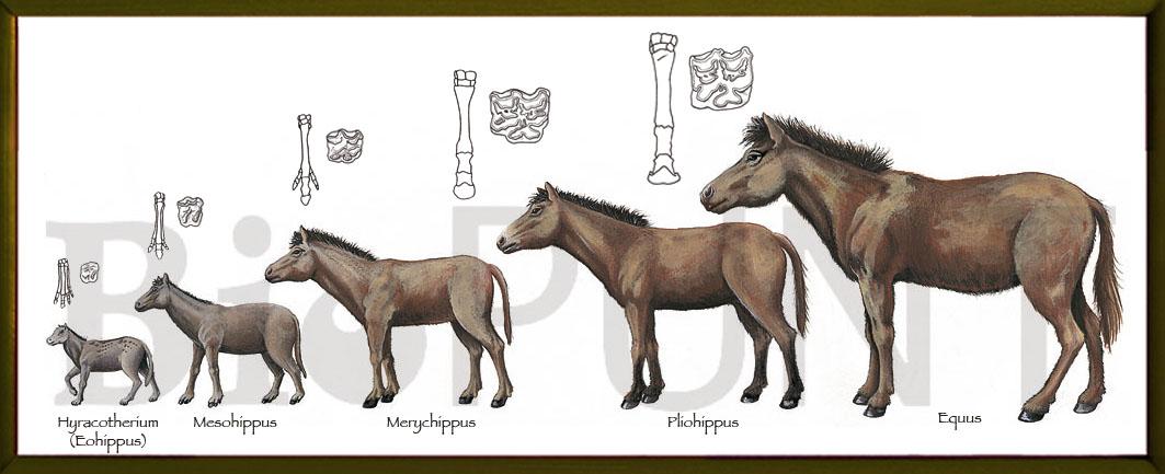 El caballo en la historia de la humanidad