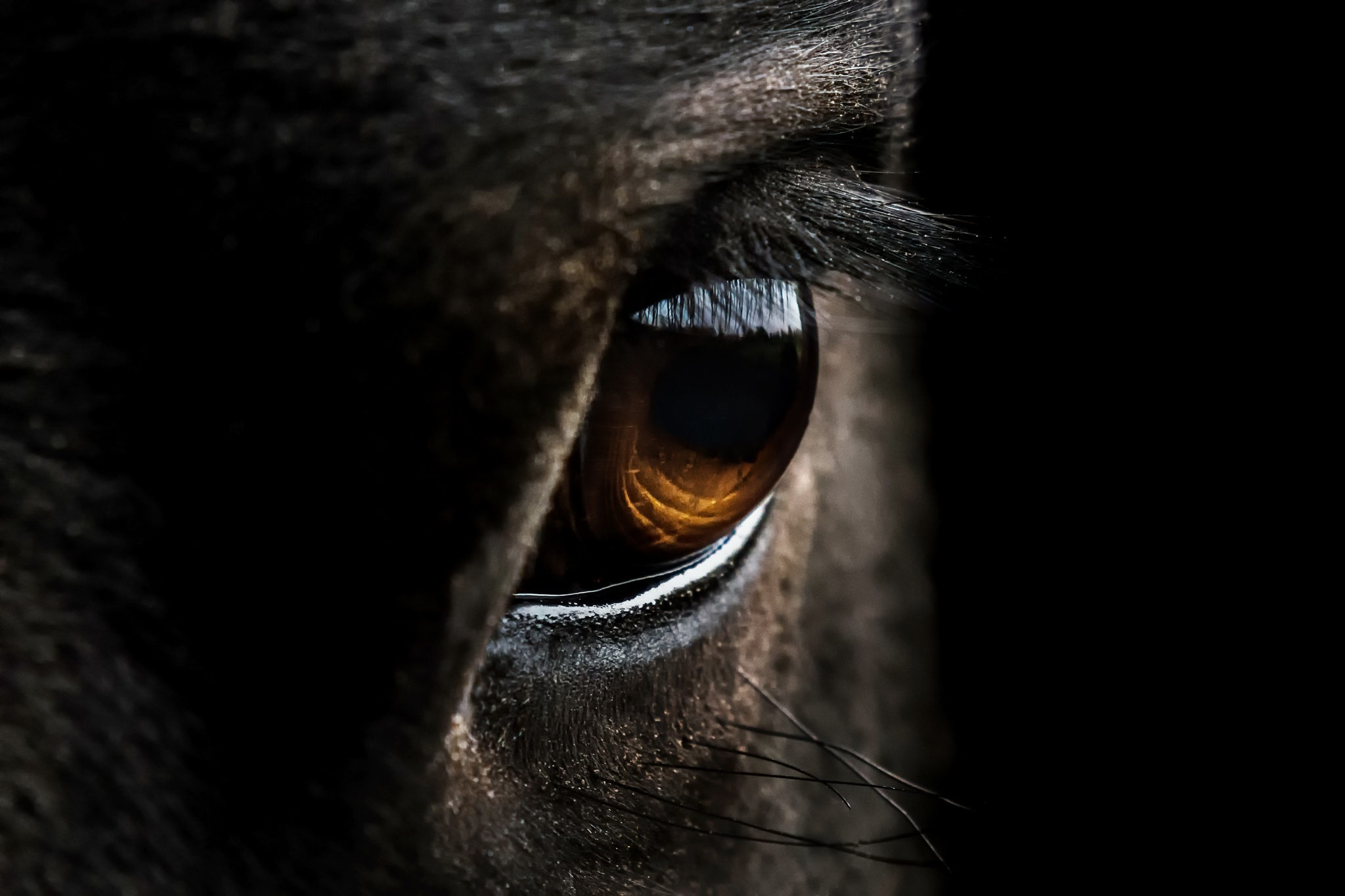 Los ojos del caballo la clave para detectar el estrés
