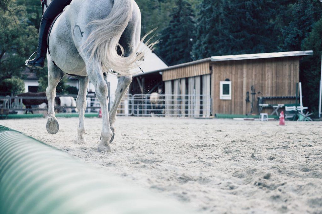 Cuidados de la cola del caballo