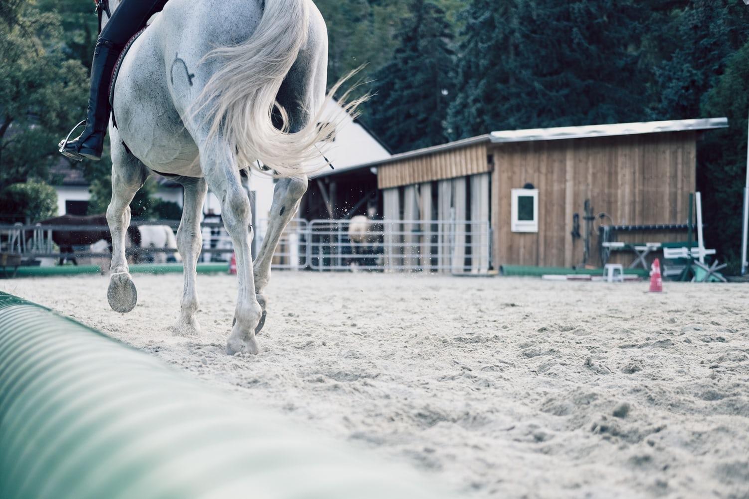 Gustavo Mirabal-cuidados de la cola del caballo