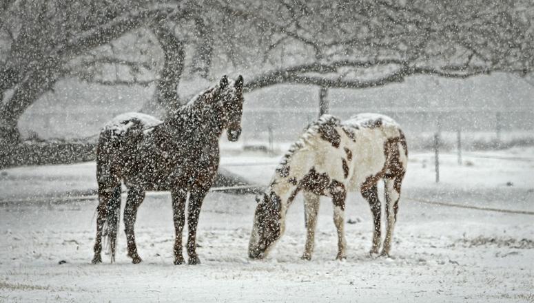 cuidados del caballo en invierno
