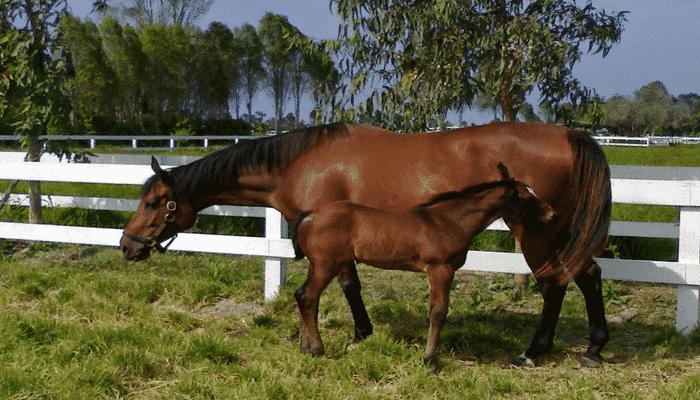 Crianza de caballos – conceptos y cuidados