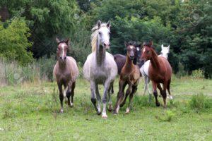 el caballo y su comportamiento