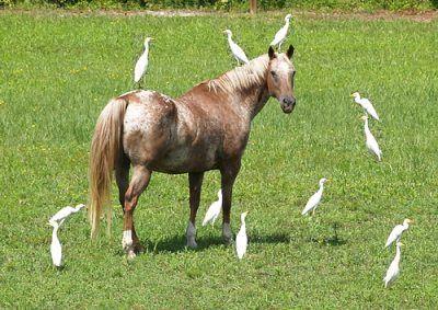 Un caballo en una fiesta de pajaritos – Gustavo Mirabal