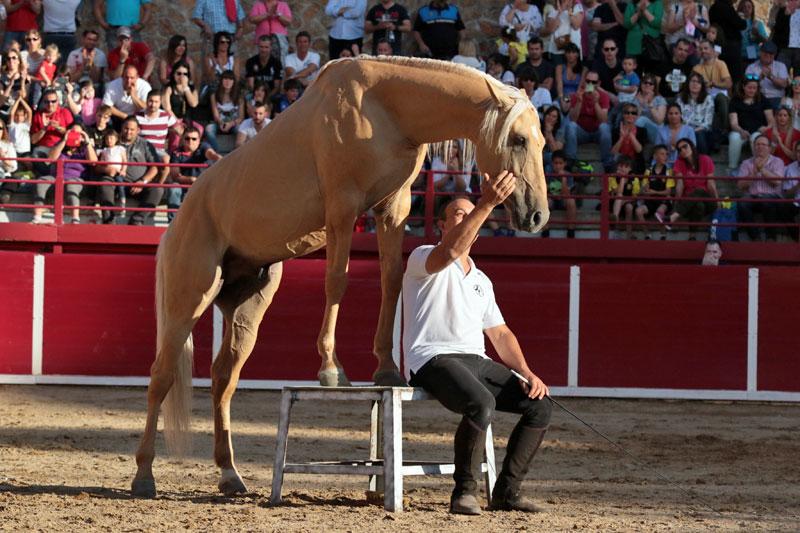 Toño Serrano domador de caballos
