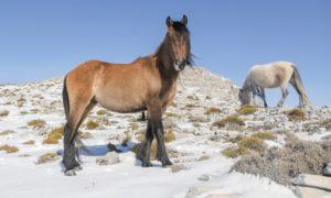 caballos salvajes en Andalucía