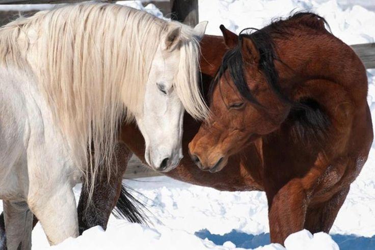 Cupido ecuestre – Amor entre caballos y sexualidad | Gustavo Mirabal
