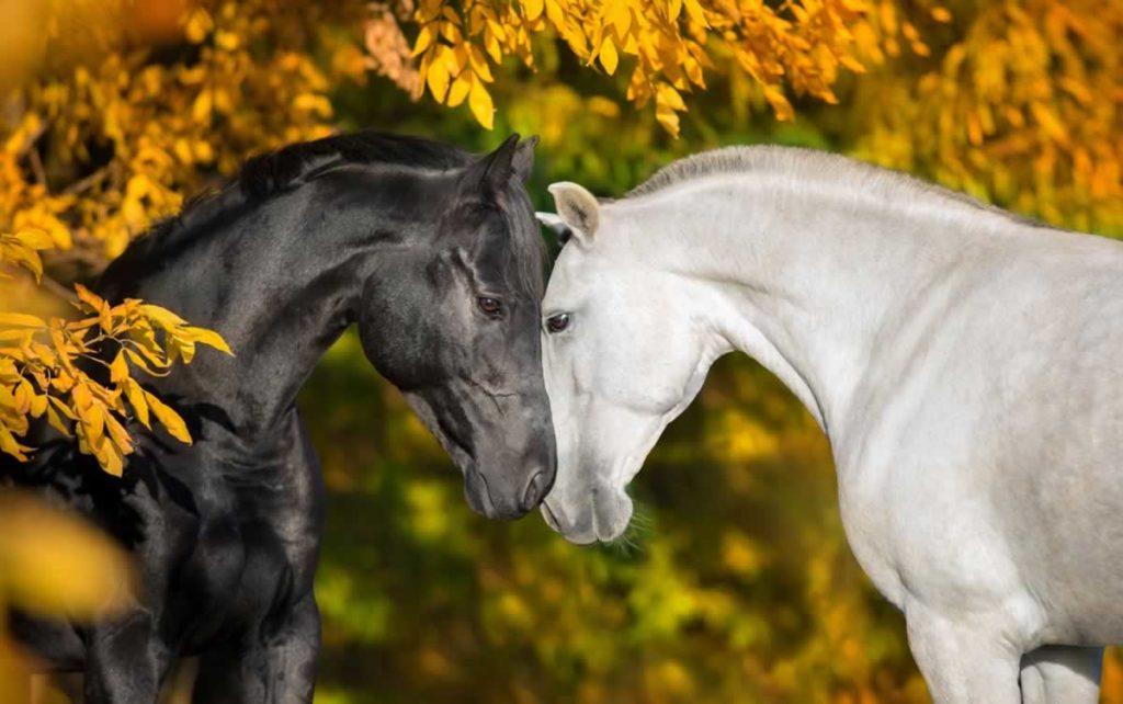 7 curiosidades sobre los caballos