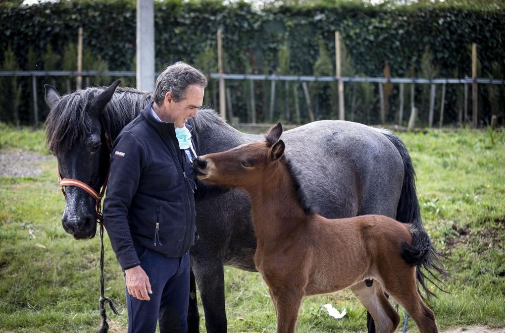 caballos en cuarentena