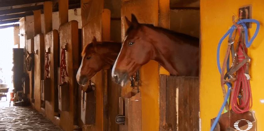 cuidados para caballos durante la cuarentena