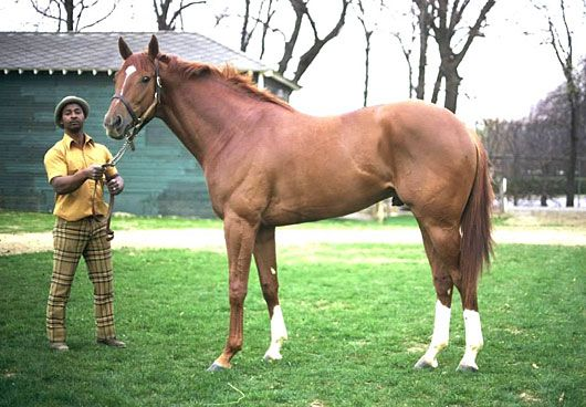 el mejor caballo de la historia