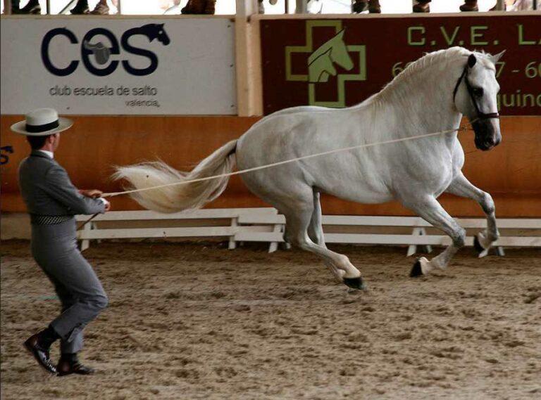 España y su orgullo por el caballo español