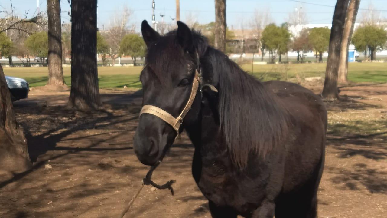 Gustavo-Mirabal-Adopta un caballo 2