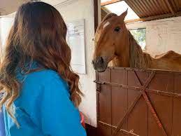 Adopta un caballo