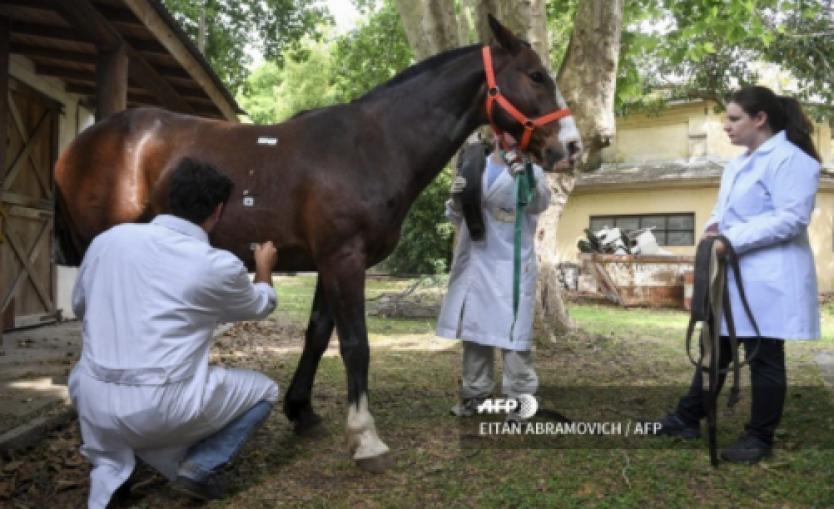 caballos que curan y salvan al mundo