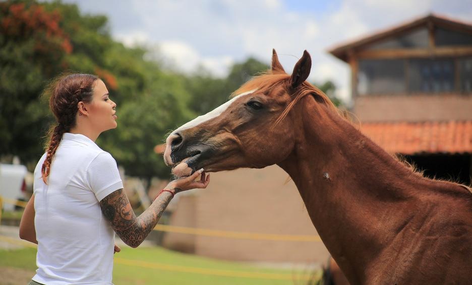 Santuario de caballos en Cuacolandia