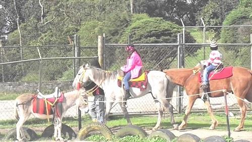 Paseos a caballo en el Junquito